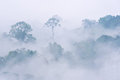 Morning fog in dense tropical rainforest kaeng krachan thailand Stock Photography