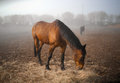 Morning. Fog. Horses Royalty Free Stock Images