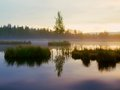 Morning fog on a lake in swamp. Fresh green birch in middle on small island. Royalty Free Stock Photo