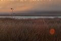 Morning fog in nature reserve gijstelterkoelen in hoogeveen netherland Royalty Free Stock Photo