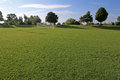 Morning Football Pitch Royalty Free Stock Photo