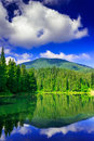 Morning in forest near lake in mountains clean crisp a coniferous the cool with reflections of clouds the Royalty Free Stock Photo