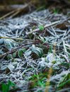Morning Frost On The Grass