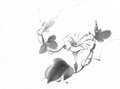Morning glory chinese ink painting Royalty Free Stock Photo