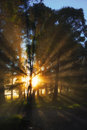 Morning glory sunrise through a copse of trees Stock Photography