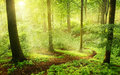 Morning in a green summer forest foggy germany Royalty Free Stock Photos
