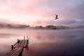 Morning lake mist gull early landscape with water surface along with reflections boat mooring moorage flying forest at the Stock Image