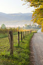 Morning Light on Country Road Royalty Free Stock Photo