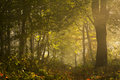 Morning light on the trail of the forest autumn with romantic road Royalty Free Stock Photos