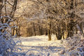 Morning light on a winter scene in the forest Royalty Free Stock Photography