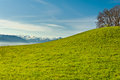 Morning mist pasture on the background of snow capped alps switzerland Royalty Free Stock Photography