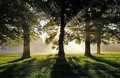 Morning Misty Sun Rays through Oak Trees Royalty Free Stock Photo