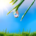 Morning nature background with drop Stock Image