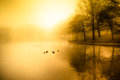 Morning pond fog and golden light over duck Stock Image