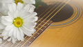 Morning relaxation and cozy with white daisy on guitar for Rural Royalty Free Stock Photo