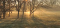 Morning shadows tree on the grass in a foggy and sunny day of a winter Stock Photography