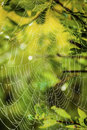 Morning spiderweb light shining through through leaves and a covered in due Royalty Free Stock Images