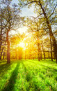 Morning sun beams in the spring park Royalty Free Stock Photo