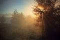 Morning Sun Ray