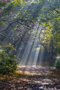 Morning sun rays shining in the autumn forest