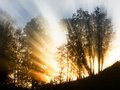 Morning sunbeam at a forest photo Stock Image