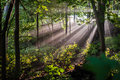 Morning sunburst a colour landscape photo of through mist in a forest Stock Photos