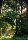 Morning sunlight in forest Royalty Free Stock Photos