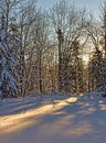 Morning sunlight streaming through forest onto snow Royalty Free Stock Photo
