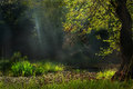 Morning sunrays a little lake deep in the forest under the Royalty Free Stock Images