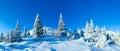Morning winter mountain landscape carpathian ukraine with fir trees Royalty Free Stock Photos