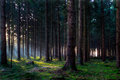 Morninglight in forest Royalty Free Stock Photo