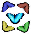 Morpho butterfly collection Royalty Free Stock Photos