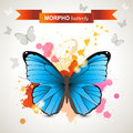 Morpho butterfly over bright background Stock Image