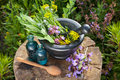 Mortar with healing herbs and sage bottles of essential oil in garden herbal medicine Royalty Free Stock Images