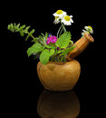 Mortar and pestle with fresh herbs on black background Royalty Free Stock Photography