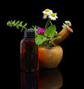 Mortar and pestle with fresh herbs and essential oil bottle on black background Stock Images