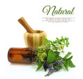 Mortar and pestle with herbs Royalty Free Stock Photo