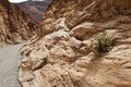 Mosaic canyon death valley detail and bush inside into nevada Stock Photography