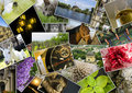 Mosaic collage with pictures of different places, landscapes, flowers, insects, objects and animals Royalty Free Stock Photo