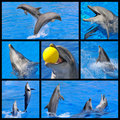 Mosaic fhotos of dolphins Stock Photos