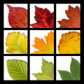 Mosaic with nine colored  leaves Stock Photography