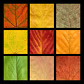 Mosaic with nine colored veins of  leaves Stock Photos