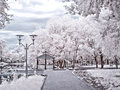Moscow. Municipal park. Infra-red photo Royalty Free Stock Photo
