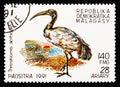 African Sacred Ibis (Threskiornis aethiopicus), Birds serie, circa 1991