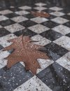 Autumn oak leaf with raindrops on a chessboard