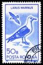 Great Black-backed Gull (Larus marinus), Water Birds 1991 serie, circa 1991