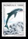 Harbour Porpoise (Phocaena phocaena), Animals serie, circa 1996 Royalty Free Stock Photo