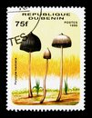 Psilocybe mexicana, Mushrooms serie, circa 1996 Royalty Free Stock Photo