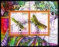 Rhyacioa Buoliana and Yponomeuta Evonymellus, Butterflies serie, circa 2008 Royalty Free Stock Photo