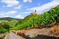 Moselle Valley Germany: View to vineyards and ruins of Landshut castle near Bernkastel-Kues Royalty Free Stock Photo